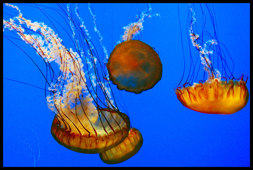 Jellyfish by LeGreg