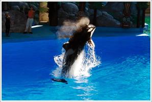 Orca by LeGreg