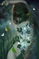 Dream about moths
