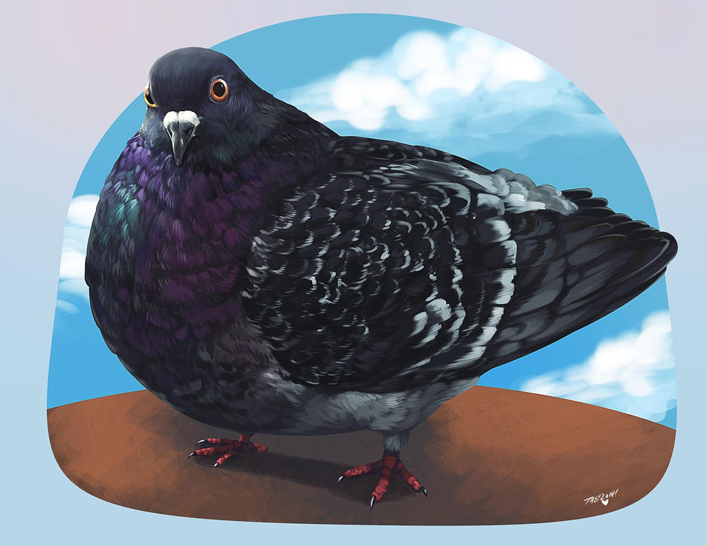 :: Gogo the pigeon :: by IvyBeth