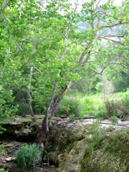 Bull Creek 4 by RueCypress