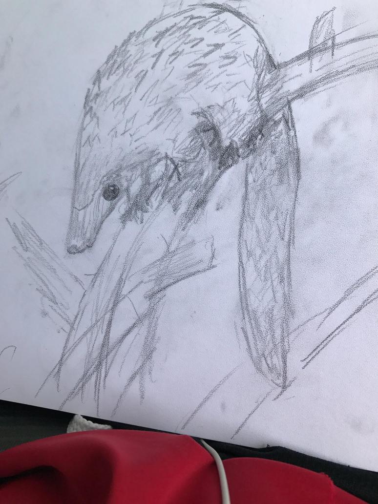 Pangolin sketch by Thebubblebot