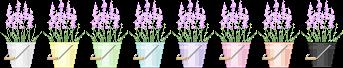 Lavender Bucket - Row [F2U]