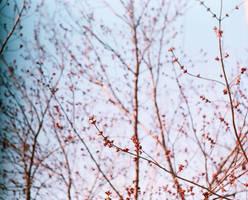 sky- by SheraRut