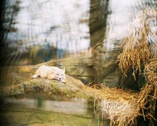 fox 6 by SheraRut