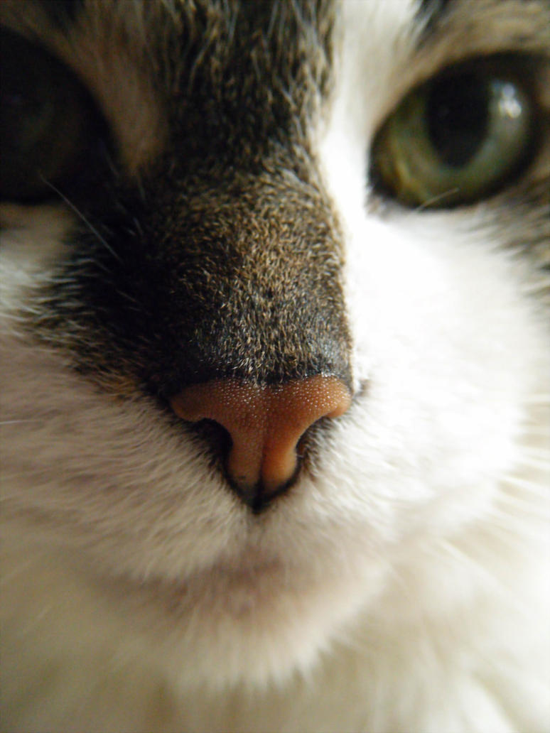 Daily Mews Photo - Router Cat Nose by akaLOLCat