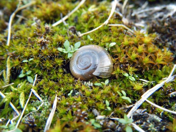Exploring Terra Photo - Snail Shell by akaLOLCat