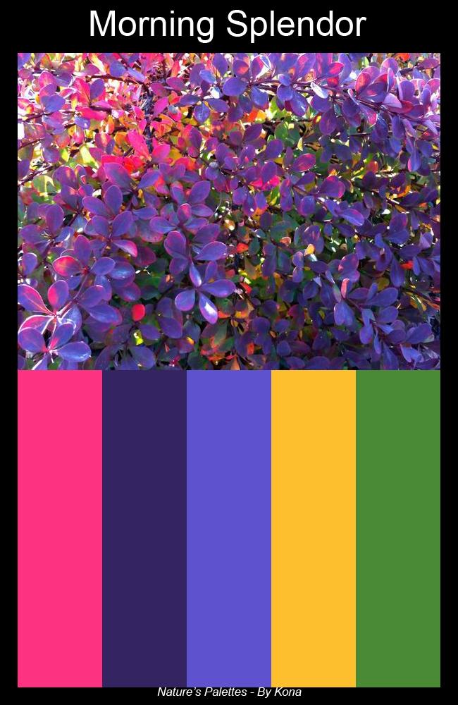 Nature's Palettes - Morning Splendor by akaLOLCat