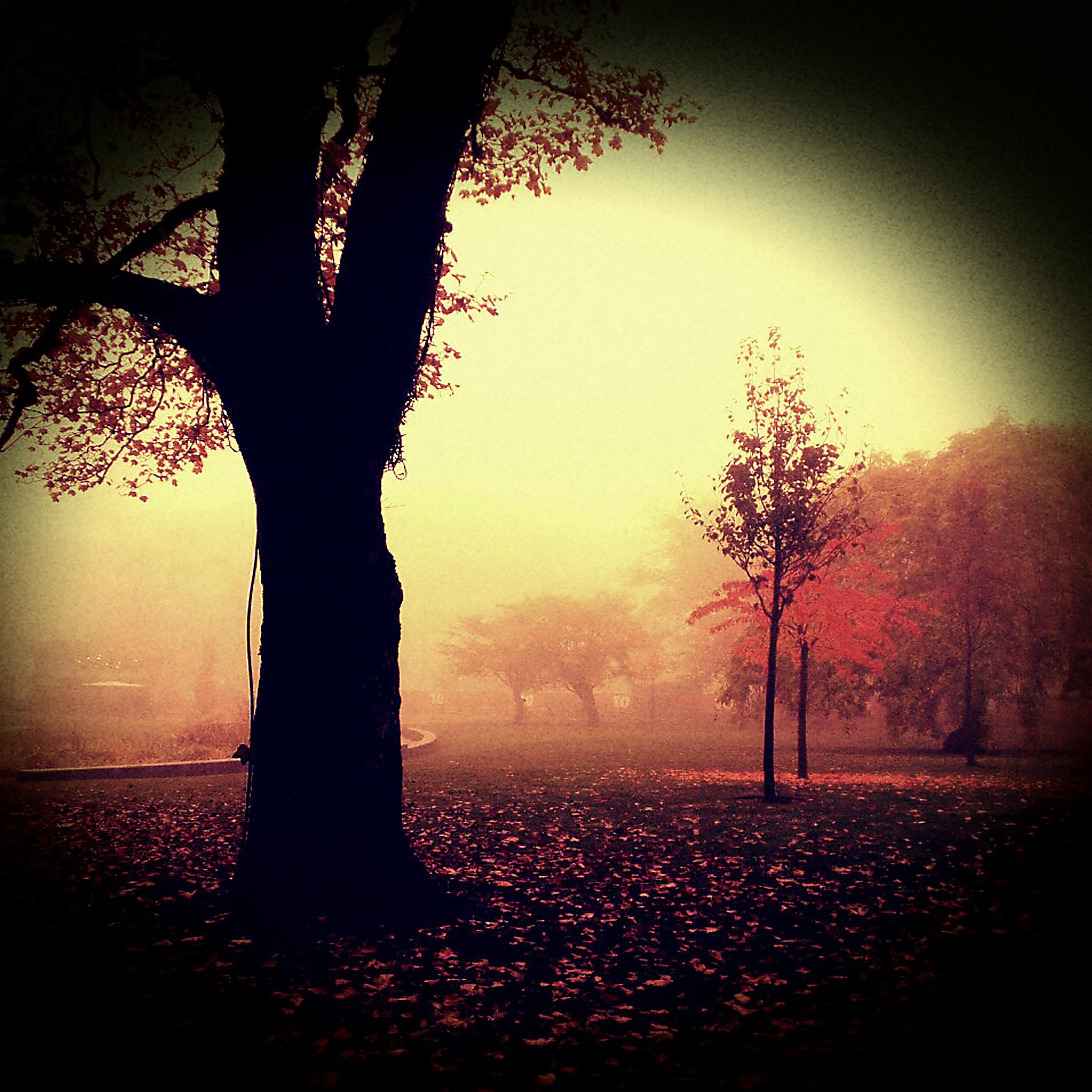 Autumn Melancholy by pvalentega