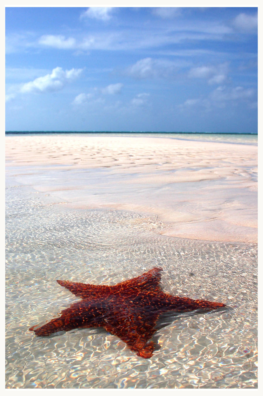 Starfish by floatingaway