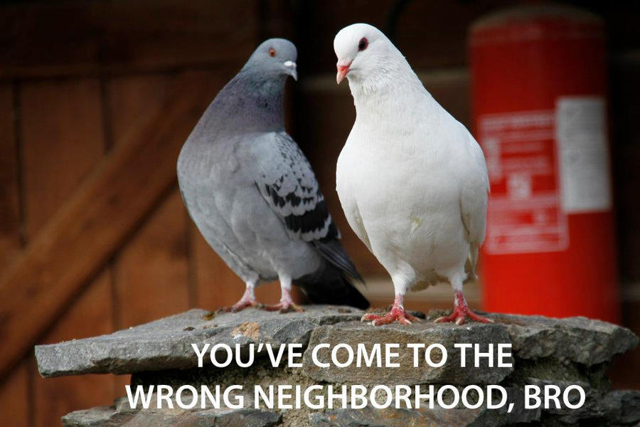 You've come to the wrong neighbourhood