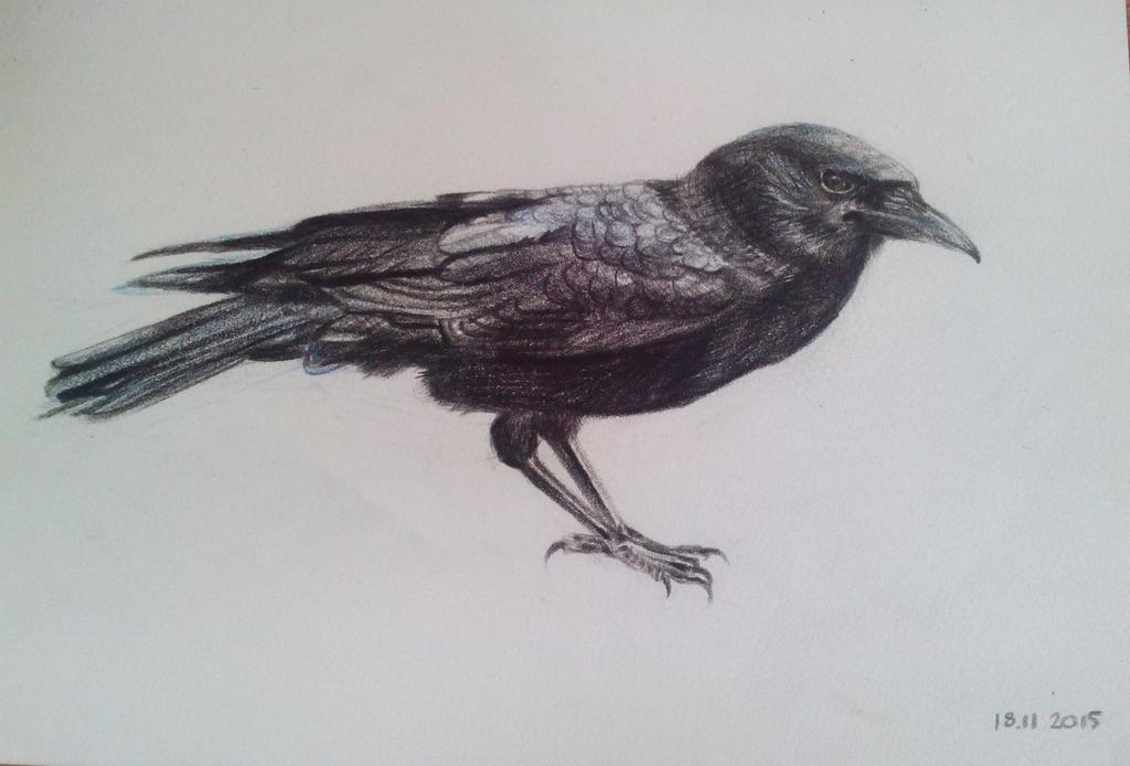 Raven by julia94s