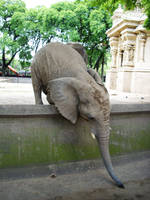 Elephant 5 by Etereas-stock