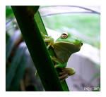 Deviant Frog