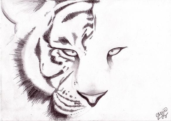 White Tiger Face Drawings