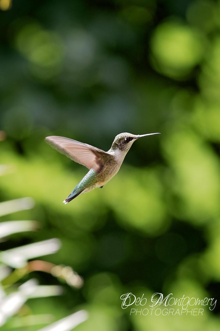 Flying High by deloulark