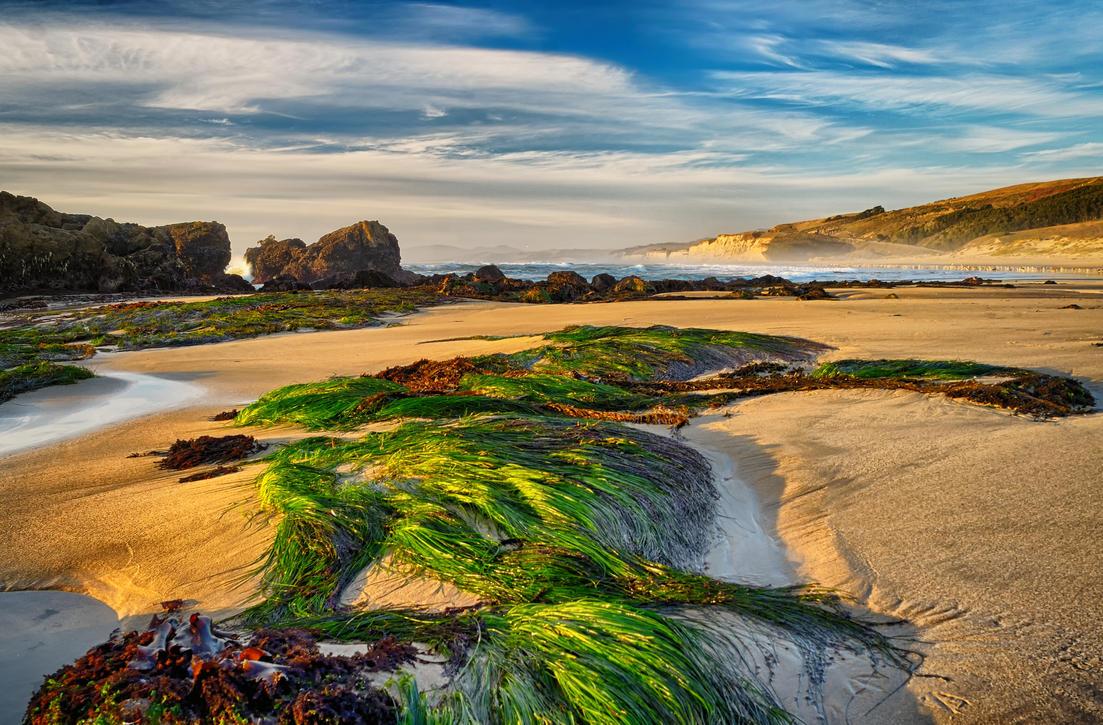 Pescadero Beach by FeralWhippet