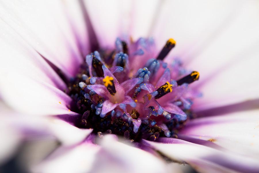 Flowers in Flower by FeralWhippet