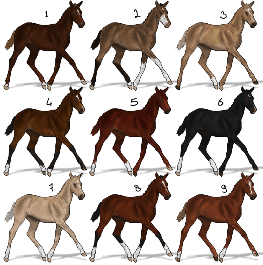 Lineaged foal auction (Rare bloodlines included!) by Cookie1992