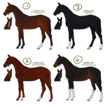 Trakehner Lineage foals [1/4 OPEN] by Cookie1992