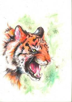 Tiikeroinen