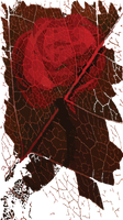 Rose (Digital Doodle)