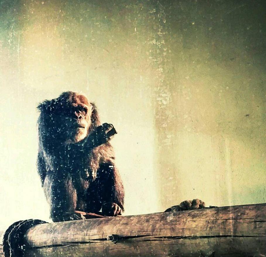 Ape by grantd123