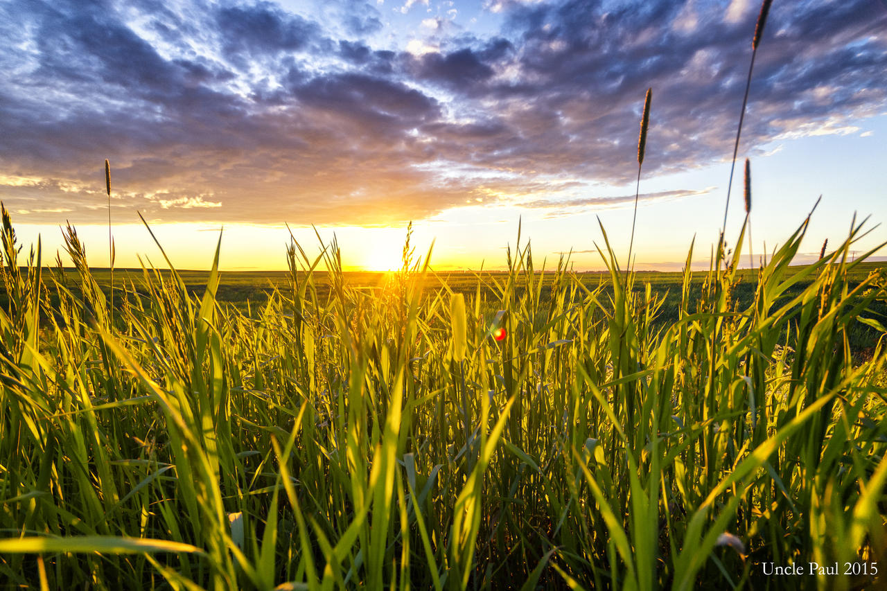 Grass and sunset by Uncle-Paul