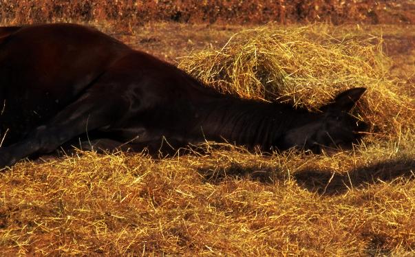 Lazy Day.. by EverlastingRide