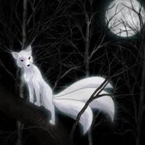 midnightdracko's Profile Picture