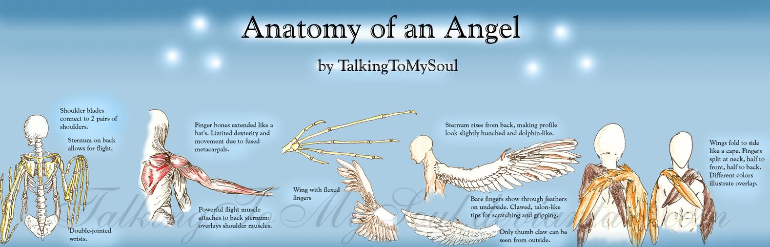 anatomy of an angel by TalkingToMySoul