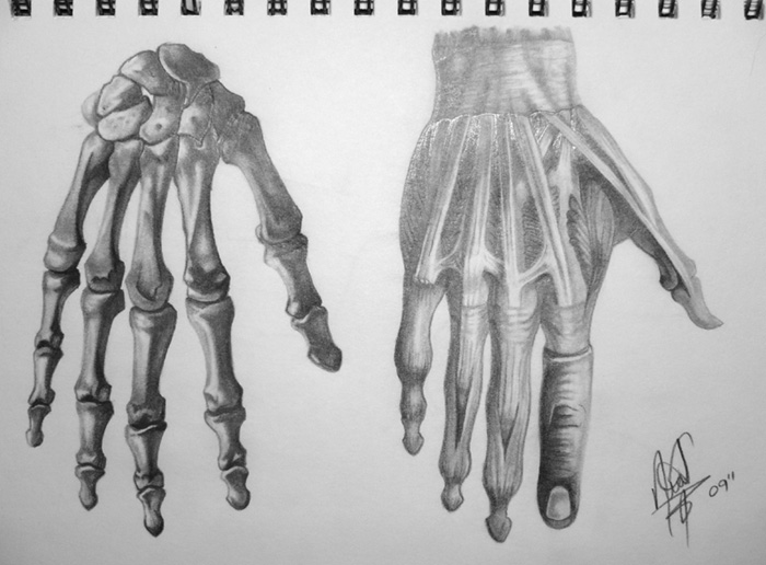 Human Anatomy Hand By Halogoddess1 On Deviantart