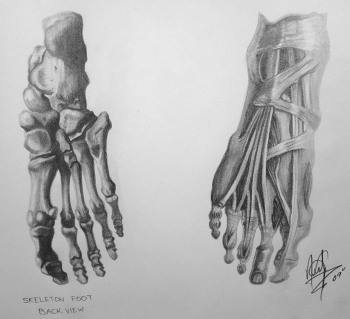 Human Anatomy Foot By Halogoddess1 On Deviantart