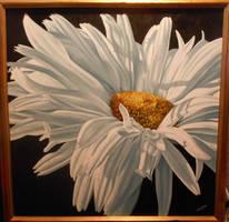 Shasta Daisy. by ChristopherPollari