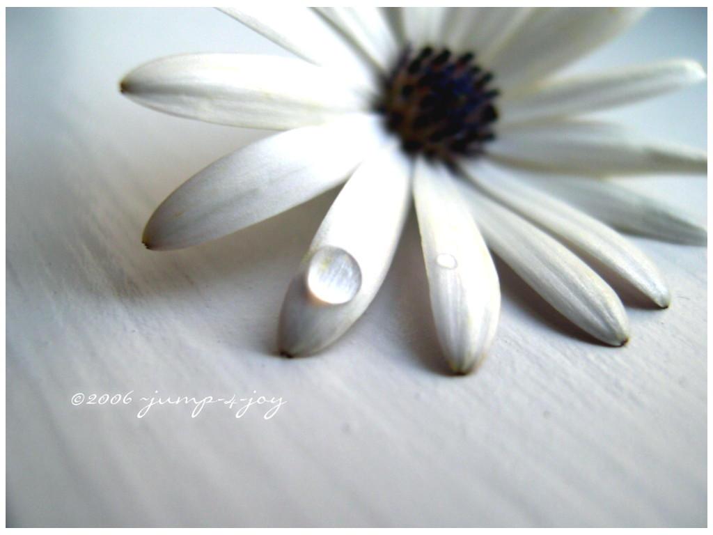 White Flower IV by jump-4-joy
