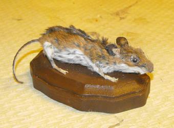 mouseadermy by Kuwaizair