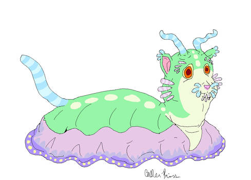 a mewdibranch