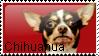 chihuahua stamp by MistyKatti