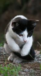 Cat Stock 02