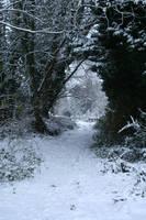 Snow stock 62 by Malleni-Stock