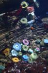Aquarium Stock 11