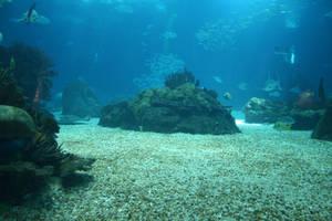 Aquarium Stock 19 by Malleni-Stock