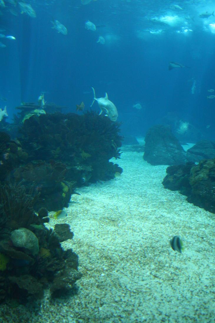 Aquarium Stock 21 by Malleni-Stock