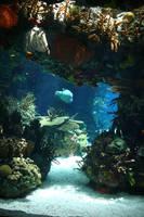 Aquarium Stock 29 by Malleni-Stock