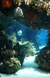 Aquarium Stock 30