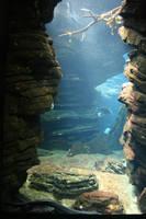 Aquarium Stock 31 by Malleni-Stock