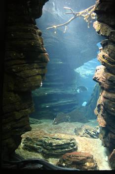 Aquarium Stock 31
