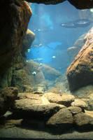 Aquarium Stock 32 by Malleni-Stock