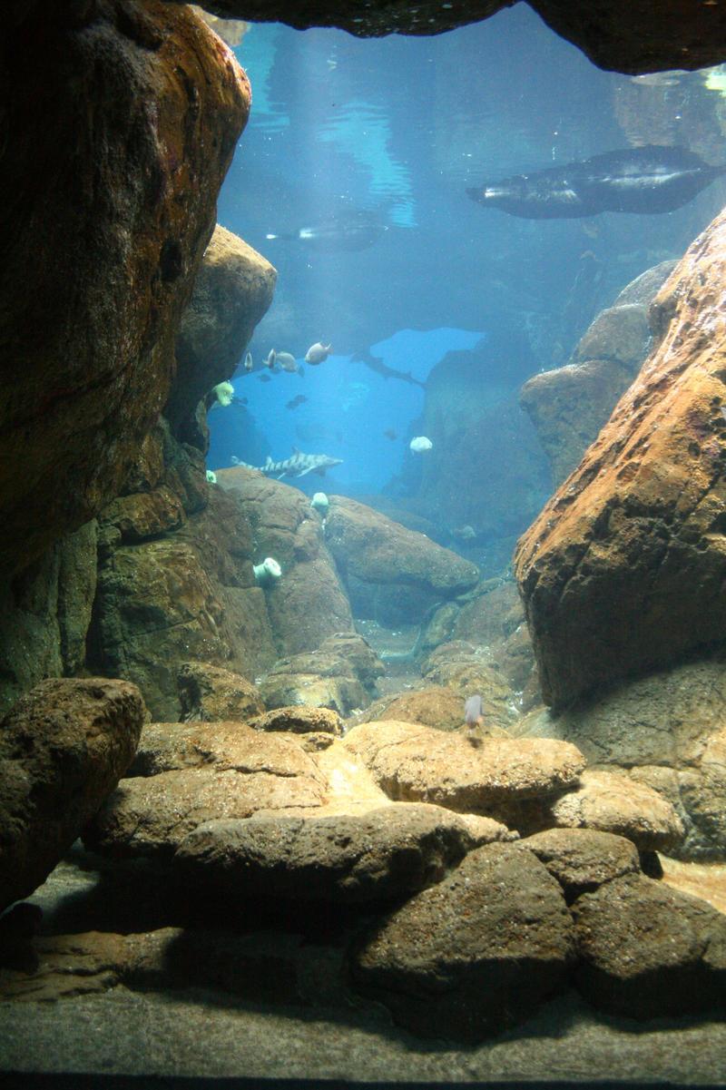 Aquarium Stock 32