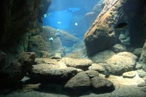 Aquarium Stock 33 by Malleni-Stock